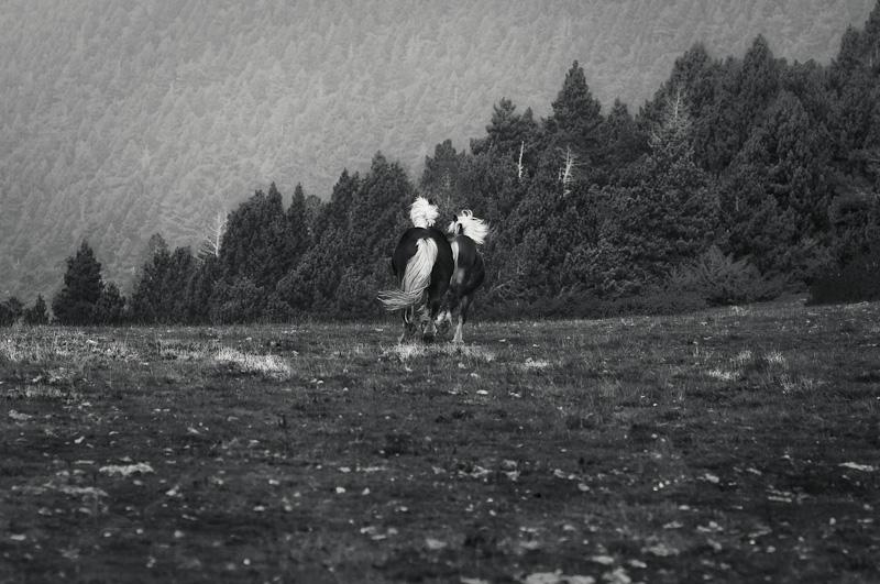 cavalls_Lluis_Ribes_Portillo