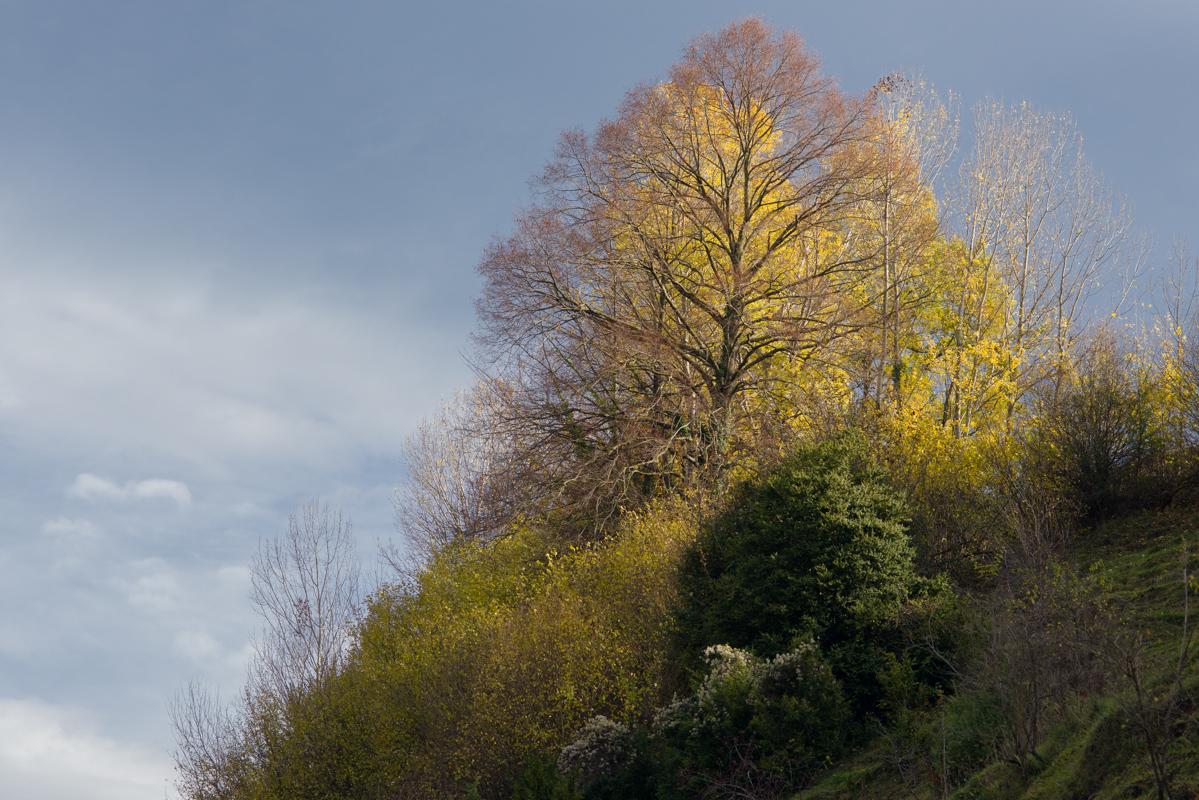 arbre_vallfogona_ripolles