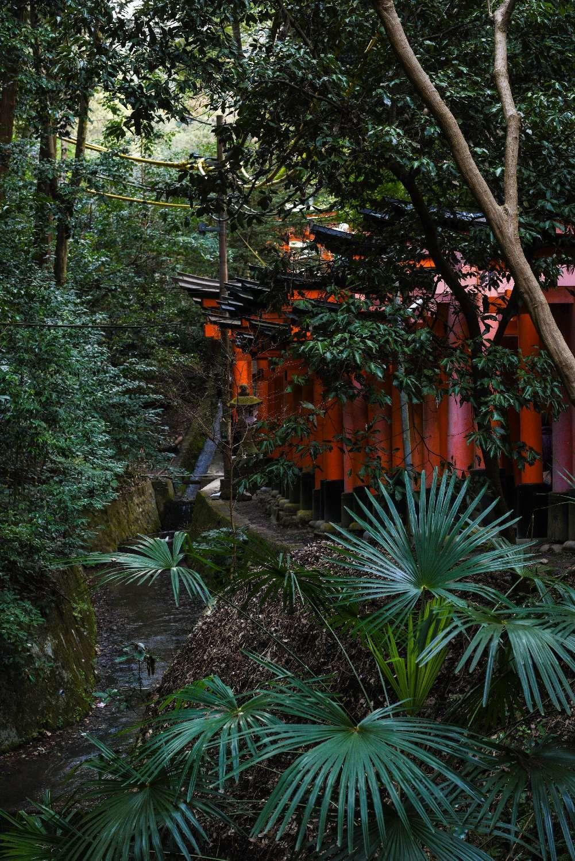 Fushimi Inari-taisha - Lluís Ribes i Portillo (cc)